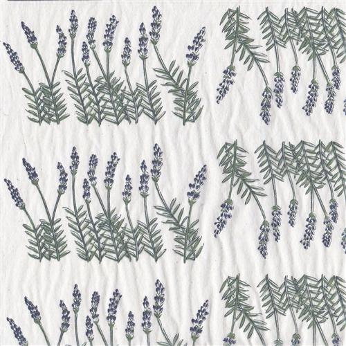 TPC7 Lavender Bush